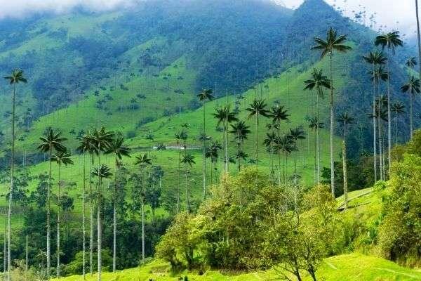 vacaciones valle del cocora
